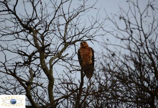 kruger-national-park-bird-on-dried-branch